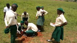 Students of Manje Y planting Canarium schweinfurthii